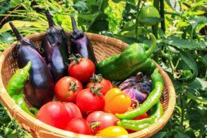 野菜の種類で選ぶ